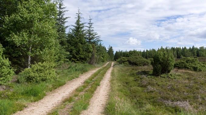 LarsGundersen_Hoverdal-Plantage_hedearealer_09