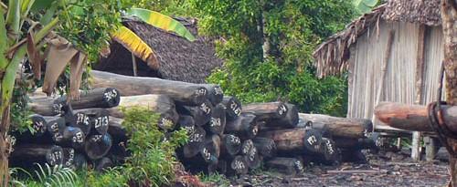Trævirksomheder har styr på importen