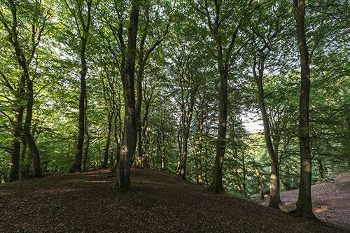 Den skovklædte Galgebakke ligger i Indskoven i Fussingø. Foto: Per Fløng