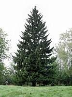 store juletræer