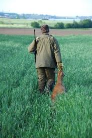 Regulering af skadevoldende vildt